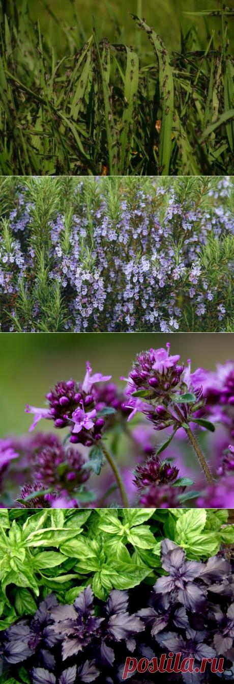 Дачные растения, отпугивающие насекомых