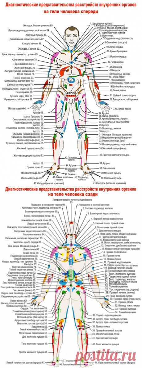Проекционные зоны внутренних органов на теле человека по Огулову - узнайте себя лучше! ~ Шкатулка рецептов