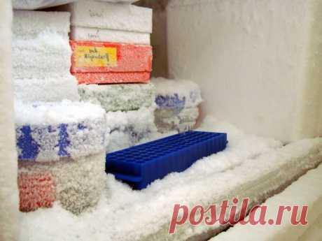 6 причин, почему ваш холодильник извергает лед - Hi-Tech Mail.ru