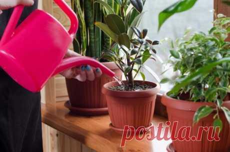 Обычное аптечное средство, которое способно вернуть комнатные растения к жизни / Домоседы
