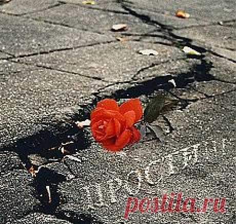 Надпись на асфальте - Стихи о жизни - Стихи о жизни - Каталог статей - Всё то, что чувствую - в стихах