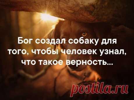 Разное>Братья наши меньшие