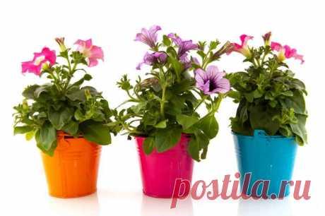 Маленькая хитрость: чтобы цветы в доме цвели пышно и долго   Азбука огородника   Яндекс Дзен