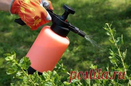 Какие цветы можно поливать перекисью водорода. Подкормка комнатных цветов перекисью водорода
