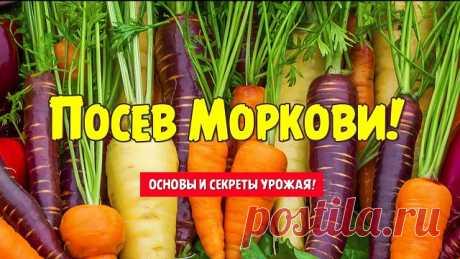 На заметку! Старинный, дедовский способ посадки моркови. Урожай возрастет в два раза