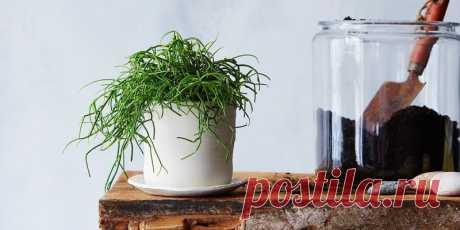 Это средство реанимирует даже самое безнадежное растение!