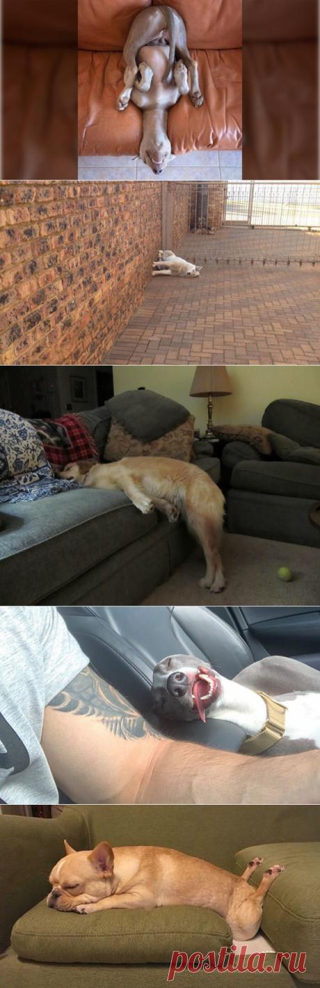Только 1% людей не засмеётся, увидев, в каких позах уснули эти собаки | В темпі життя