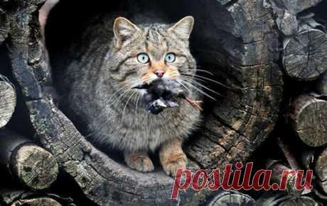 Кошки, мусор, борщевик: различные экологические проблемы в разных странах | путешествуем онлайн | Яндекс Дзен