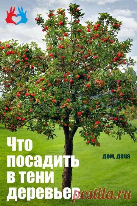 Что посадить в тени деревьев | СЕКРЕТ | Дом и дача | Сад