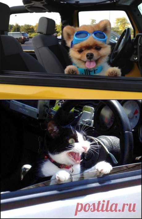 Почему собаки лучше кошек | Prikolisti.com