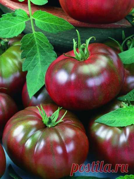 Самые вкусные томаты! Серия томатов «Вкуснотека» от агрохолдинга ПОИСК - Ботаничка.ru