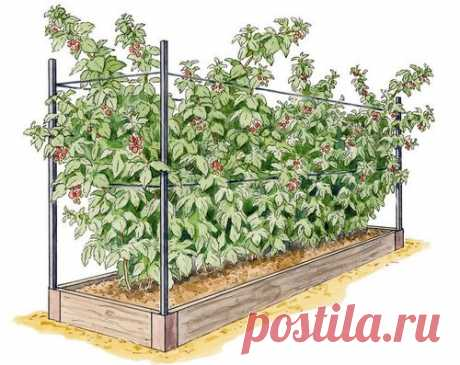 Мульчирование малины осенью и весной: чем и как выполнять