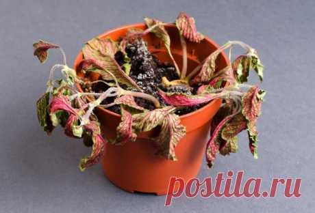 Почему заплесневел грунт в цветочном горшке | Полезно (Огород.ru)