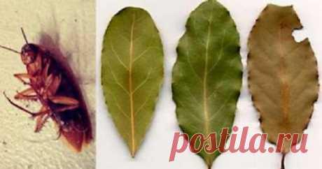 Избавьтесь от тараканов, разместив несколько листьев этого растения в каждом уголке вашего дома! - Счастливые заметки