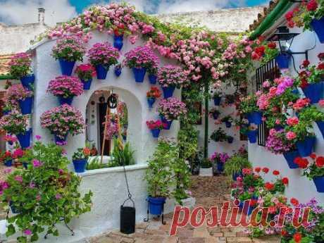 Шесть полезных растений для дома по фэн-шуй