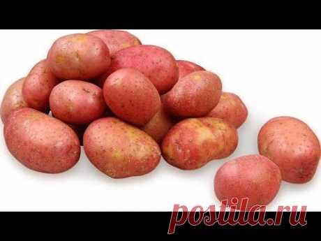 ТОП 4 Рецепта из КАРТОФЕЛЯ на НОВОГОДНИЙ СТОЛ. Блюда из Картофеля.