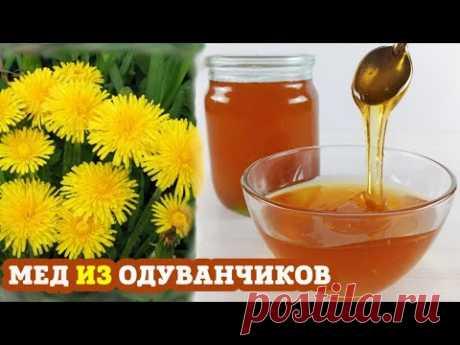 Мед из ОДУВАНЧИКОВ | Пошаговый рецепт