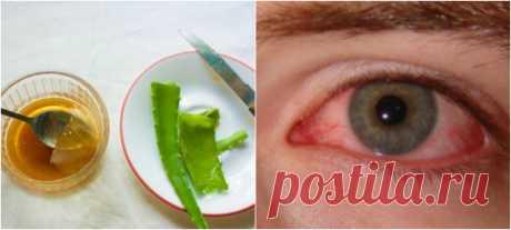 Восстановить зрение просто: народный рецепт, который буквально спасает глаза!  Алоэ — настоящее спасение для тех, кто страдает от проблем со зрением. Поделимся рецептом чудесного лекарства с соком алоэ. Это средство — настоящая витаминная бомба для глаз! Может успешно применять…