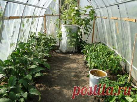 Greenhouse in the fall: cleaning, fertilizers, general leaving