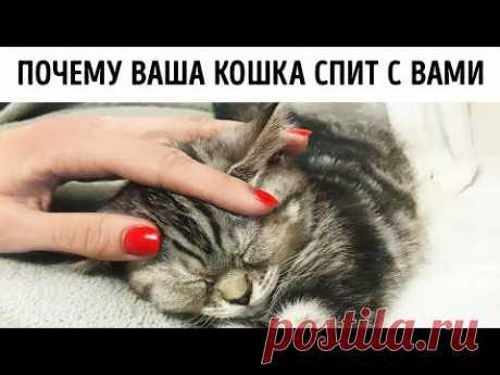Вот почему кошки любят спать с нами в кровати