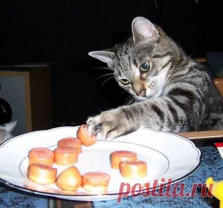 Прикольные коты вечно что-то воруют Новая интересная тема про наших любимых домашних питомцах носит название - забавные коты вечно что-то воруют. Такие вот они коварные, эти четвероногие пушистики, обитающие в наших жилищах. Имея в доме...
