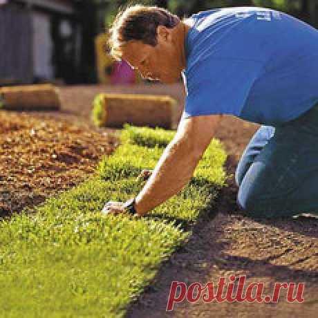 Трава для газона в Херсоне. Сравнить цены, купить потребительские товары на Prom.ua