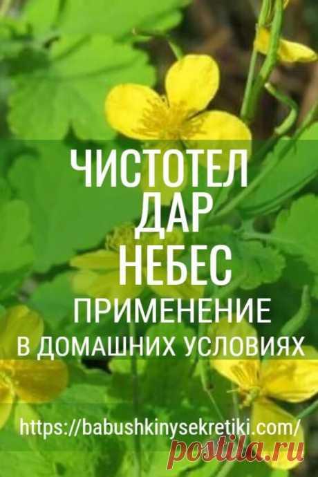 Это растение - настоящий ″подарок небес″ страдающим от недугов людям! Вот что с ним делать