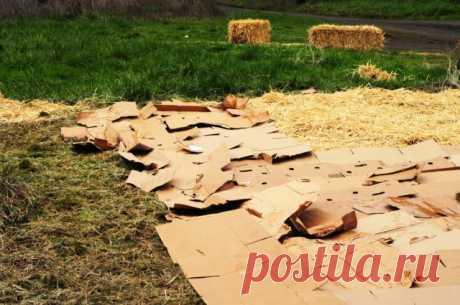 Картон и газеты на грядках: зачем нужны и как их применять без вреда для урожая   Почва и плодородие (Огород.ru)