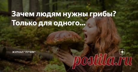 Зачем людям нужны грибы? Только для одного... Скорее, это люди зачем-то нужны грибам, потому что грибы людям не нужны точно. Кроме одного случая...