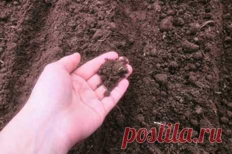 Как определить, что почва на огороде кислая | Дачные секреты от Виктории Радзевской | Яндекс Дзен