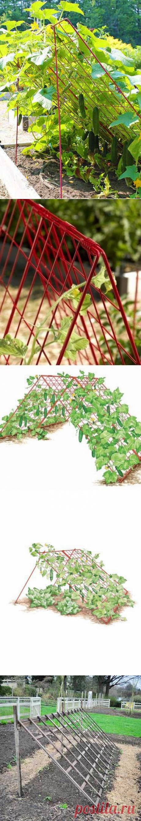 Этот прием позволит выращивать больше огурцов на грядке | Мои Идеи Для Дачи и Сада