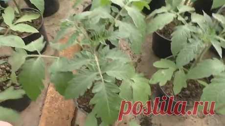 Золотые правила выращивания рассады!