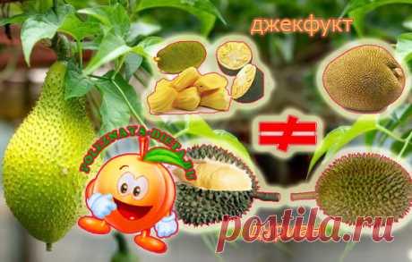 Джекфрут часто встречается в веганской кухне. Что такое джекфрукт? Действительно ли он может иметь вкус мяса. Какие у него свойства? Чем он отличается от дуриана? Джекфрут - происхождение Джекфрут - плод дерева джекфрут, которое растет в Юго-Восточной Азии. Это национальный фрукт Бангладеш, похожий на продолговатую дыню или большое манго. Слово «джекфрут» происходит от португальского слова...
