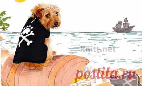 Вязаная спицами попона для собачки Вязаная спицами попона - отважный пират. Для выхода в свет в прохладную погоду. Попонка вяжется единым полотном (вместе с поясками) по направлению от хвоста