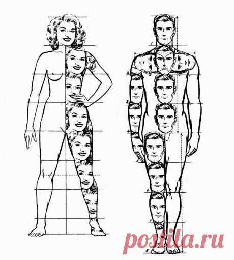 минимум о пропорциях лица и фигуры - запись пользователя Лиза (id1607627) в сообществе Кондитерская в категории Мастер-классы по мастике и не только - Babyblog.ru