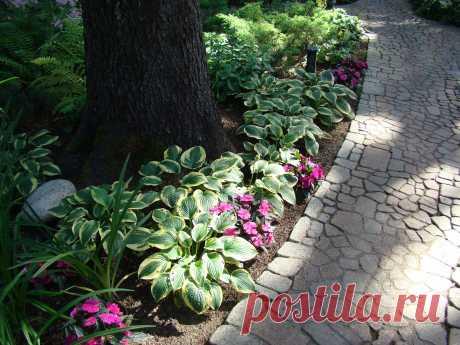 Обустройство теневой зоны сада Во многих садах есть разнообразные проблемные зоны; одна из них – теневая. Имеются немногочисленные виды тенелюбивых и теневыносливых растений, которые чувствуют себя в тени вполне благополучно. Большинству же видов растений для хорошего роста и развития необходимы прямой солнечный свет (полностью...
