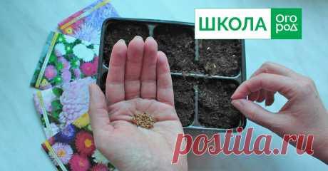 Какие цветы надо сеять на рассаду в марте Многие однолетние цветы обязательно выращивают через рассаду. Какие культуры пора посеять в марте, чтобы в июне-июле получить яркий цветник?