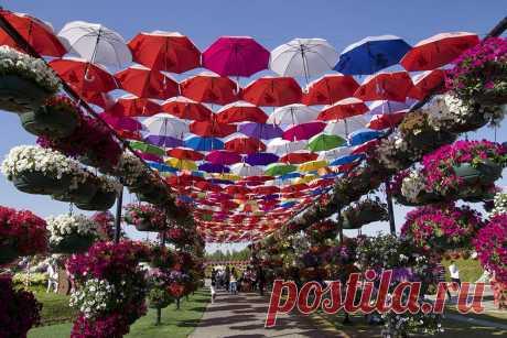 Экскурсия в Парк Цветов и на Глобальную Ярмарку в Дубае — цена $55