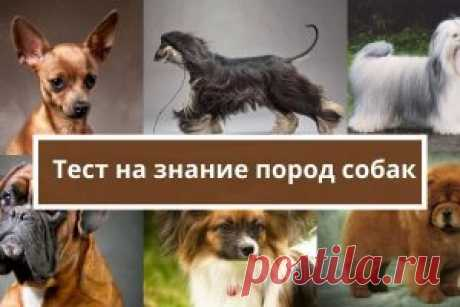 Тест на знание пород собак | Психология
