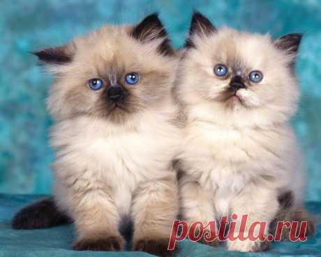 Милые котята!