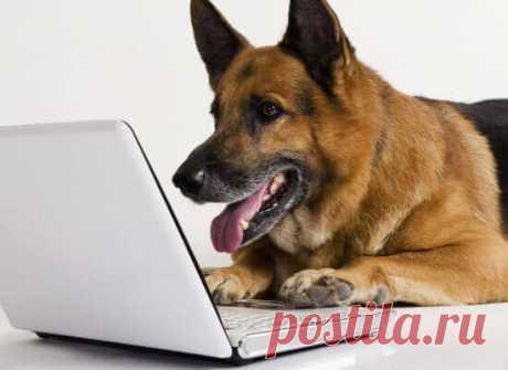 Послушные породы собак