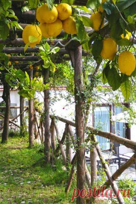 The Edible Garden   Огород в палисаднике