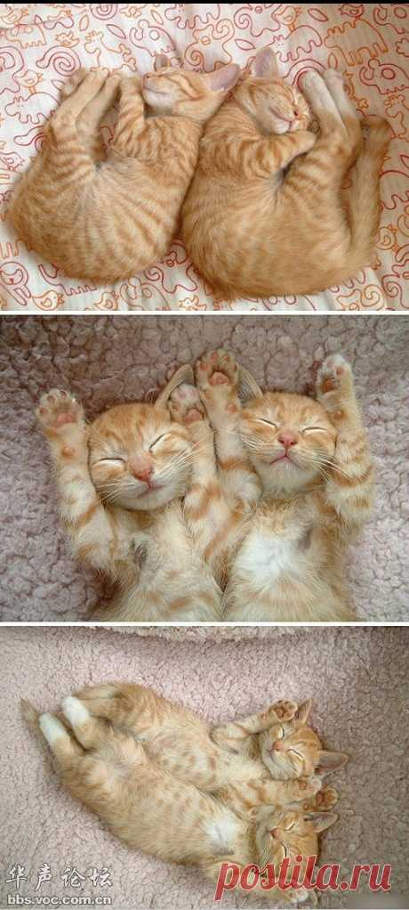 Братаны | Cat-Tube