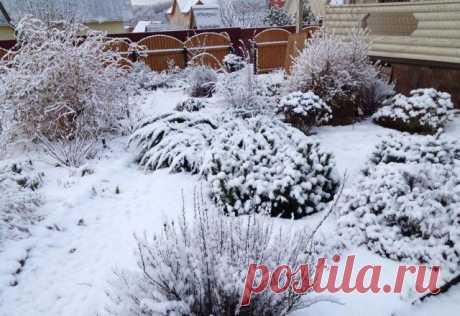 Лучшие материалы для зимнего укрытия растений | Почва и плодородие (Огород.ru)