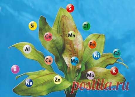 Типы удобрений. Минеральные (азотные и калийные), бактериальные и органические удобрения.