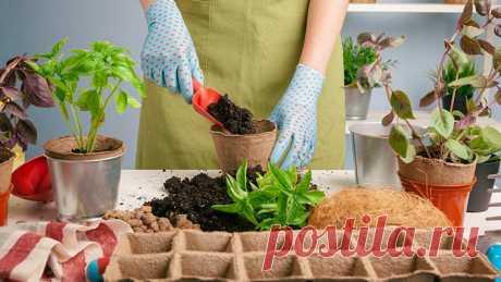 Как вырастить огород на подоконнике + лучшие культуры для выращивания.