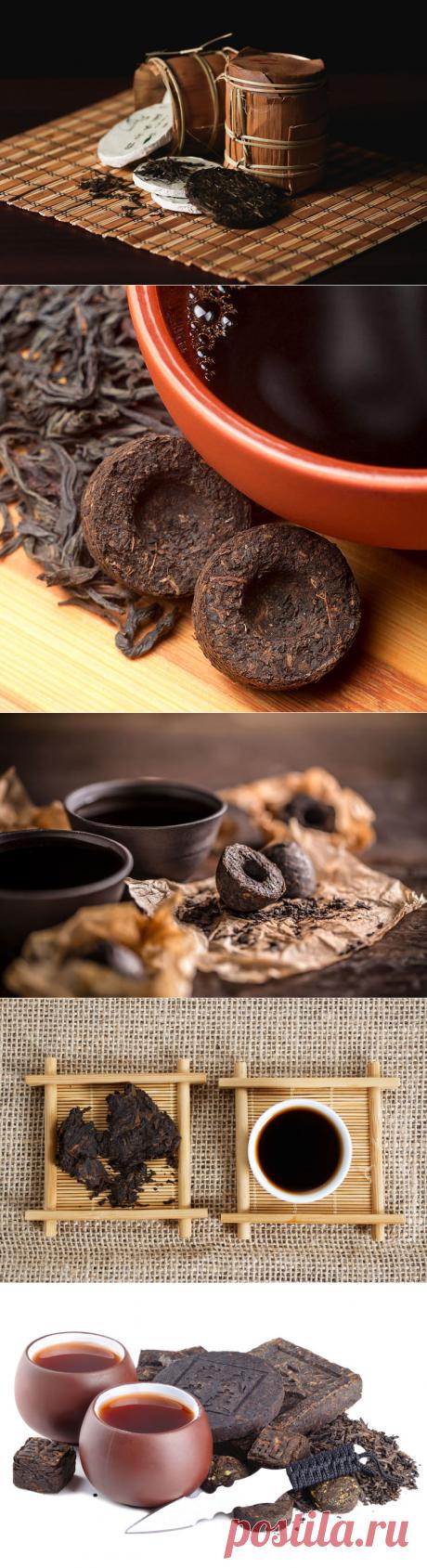 Пуэр – самый дорогой чай в мире