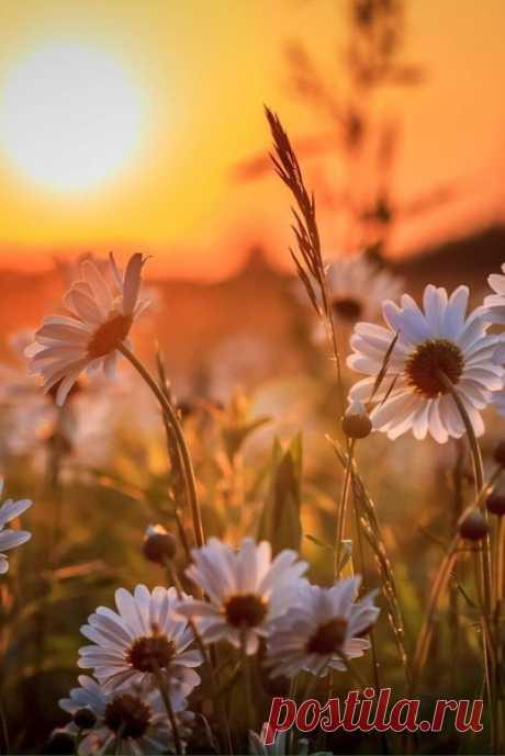 Пусть это лето будет солнышком согрето ...