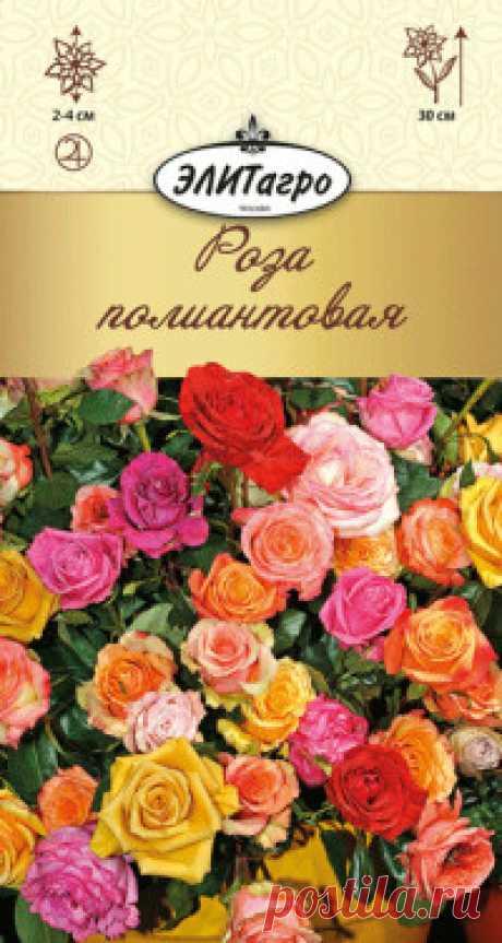 """Семена. """"Роза полиантовая"""", многолетник (вес: 0,03 г) Всхожесть: 94%. Миниатюрные розы этого вида вырастают в высоту не более 30 см. Полумахровые цветки, диаметром 2-4 см, сиреневого, розового и белого оттенков обладают приятным запахом. Для лучшего цветения удаляют завядшие цветки. Главный секрет их выращивания - яркий свет и прохладный..."""