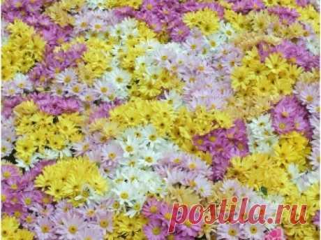 Полевые цветы скачать картинки » DreemPics.com - лучшие фото, картинки и обои на рабочий стол на любую тематику!